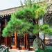 Master of Nets Garden (Wang Shi Yuan), Suzhou, China