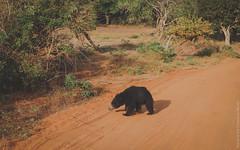 25.06-Yala-National-Park-Sri-Lanka-canon-1500px-017