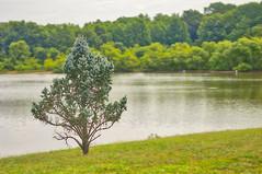 july 01 2017 (avflinsch) Tags: ifttt 500px lake spring tree summer fall history seasons