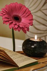DSC01649.jpg (andreavarju) Tags: relaxing flower bath