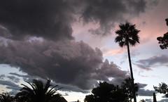IMG_0768 Special evening (jaro-es) Tags: canon costablanca clouds himmel herbst nature natura natur naturewatcher naturemaster naturesfinest españa eos70d evening spanien spain spanelsko nubes