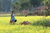 Maikal hills - Chhattisgarh - India (wietsej) Tags: maikal hills chhattisgarh india sony a700 zeiss sal135f18z 13518 sonnar13518za woman landscape yel bhoramdeo wietse jongsma