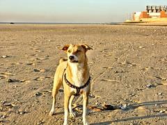 DSC07156_SV1 (errefotos) Tags: animal canino canine canin cao perro dog chien cadela perra femaledog shedog chienne barreiro portugal sonydscv1