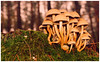 """smile on saturday"" - ""tiny treasures in flora""!!! - DSC_1648 (FMAG) Tags: kpn roztokawiersze smileonsaturday tinytreasuresinflora moss mushrooms forest"