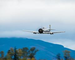 AT-6 GOING LOW, REAL LOW.... (AvgeekJoe) Tags: 4244709a d5300 dslr hfm heritageflightmuseum hogwildgunner kbvs n190fs nikon nikond5300 northamericansnj northamericant6d northamericant6dtexan northamericantexan skagit skagitcounty skagitregionalairport t6texan t6 t6d t6dtexan texan trainer warbirds aircraft airplane aviation plane radialenginedairplane soundofround warbird