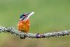 Kingfisher (608 of 677) (graemecave) Tags: kingfisher canon canon5dmk111 bird birds fish colours canontest 100400l leeds yorkshire england blue exposure green mk111 uk portrait river water exposur zz