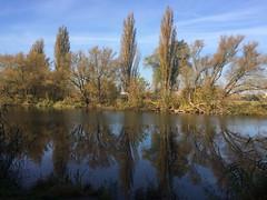Saale, Spiegelung am Kanal (julia_HalleFotoFan) Tags: hallesaale saale kanal spiegelung