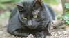Gata en azopardo-08102017-Nº6421--2 (EduBa66) Tags: cats kitten cat chaton gatito gatinho kätzchen котенок black green eyes
