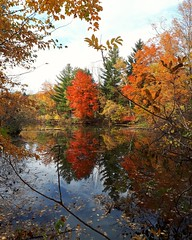 autumn beauty (angelinas) Tags: autumn fall trees nature landscapes paysages paesaggio natura autunno automne autumnleaves outdoors parks stbruno quebec canada waterscape reflections