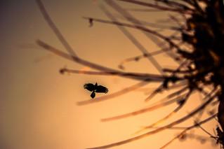 Flying high in sunset sky..🌅😇📷