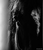 Tender Eye (snakecats) Tags: 苫小牧市 北海道 日本 jp 馬 horse 動物 animal 目 eye 白黒 白黒写真 モノクローム モノクロ monochrome モノクロ写真 blackandwhite bw black white ノーザンホースパーク 苫小牧 tomakomai northernhorsepark hokkaido japan