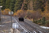Catching a train (JD~PHOTOGRAPHY) Tags: grizzly grizzlybear bear banff banffnationalpark train tracks nature wildlife wild animal wildanimal canon canon6d canadianwildlife