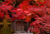 Eigenji (t.kunikuni) Tags: 久慈郡 茨城県 日本 jp 太子町 永源寺 茨城 久慈 太子 秋 紅葉 寺 kujigun kuji ibaraki ibarakiken japan daigo daigomachi eigenji temple autumn fall red