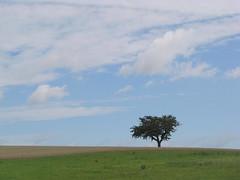 Hoch aus des Himmels Fernen schwebet (amras_de) Tags: baum træ stablo boom árbol drvo arbre strom tree arbo puu zuhaitz crann fa arbore tré albero arbor medis koks tre drzewo árvore àrvulu drevo träd agaç himmel nebo cel obloha sky cielo zeru taivas ciel spéir ég himinn dangus debesis hemelgewelf cèu niebo céu cer celu lift gökyüzü