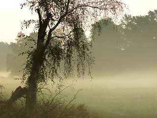woods and meadows still dreaming
