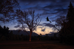 Almost Spooky :) (Kevin_Jeffries) Tags: night le exposure spooky trees mood cloud stars nikon nikkor kevinjeffries silhouette halloween witch fun ghoulish broomstick nightphotography art nightflight bewitching scary wow creepy