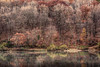 The Brown Season (Mulewings~) Tags: sidiehollowpark vernoncounty vernoncountyparks trees reflections water manmadelake morning mistywaters edited