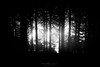Dark forest (Mimadeo) Tags: scary dark forest spooky fear horror mood monochrome moody dramatic landscape magic tree nightmare shadow light evening nature mystery darkness black halloween woods background evil creepy fantasy gothic mysterious surreal silhouette branch white blackandwhite ghost atmosphere leaves trunk dirty grain fog gloomy