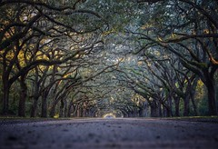 Perspective Wormsloe Tree Road The Way Forward Nature Outdoors Beauty In Nature Scenics No People Tranquility Bare Tree Day Branch Savannah Georgia Landscape (mikedunnit) Tags: wormsloe tree road thewayforward nature outdoors beautyinnature scenics nopeople tranquility baretree day branch savannah georgia landscape