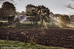 20170929-7919-Stokhem-bw (Rob_Boon) Tags: colefpro4 mist stokhem zonsopkomst robboon landscape
