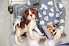 IMG_1900 (vasilina_antsiferova) Tags: leekeworld mikhaila art body beagle pet doll iplehouse