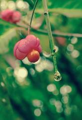 Raindrop (mrsparr (on the mend at last)) Tags: park toronto ontario canada humberbayparkeast raindrop pink bokeh nature 7dwf flora friendlychallenges