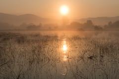 Cerknica Lake (happy.apple) Tags: otok cerknica slovenia si cerkniškojezero cerknicalake slovenija slo intermittentlake presihajočejezero landscape morning fog sonce sun