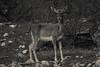 27102017-DSC_0092.jpg (stephan bc) Tags: cazorla reis zoogdieren regioandalucia zwartwit