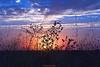 Sensaciones en un atardecer (ricardocarmonafdez) Tags: atardecer sunset cielo sky sol sun sunlight contraluz backlight nubes clouds color mood atmosfera atmosphere naturaleza nature canon 1785isusm paisaje landscape andalucía sevilla aljarafe blue