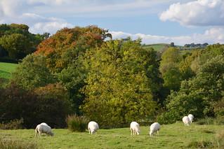 Autumn Leaves, Combs, Peak District National Park, Derbyshire, England.