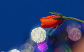 Flower - (3815)