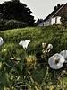 Flowerart (hanneelinhellesøy) Tags: greenfields fields oldbuildings buildings fences flowers