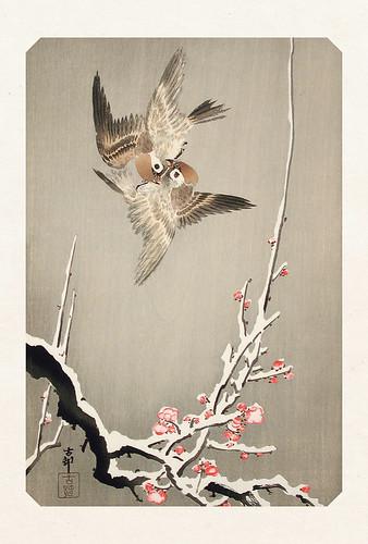 15-Carte postale // 10x15cm // Sparrows