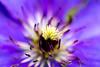 Strange things from the garden 1 (Flatroad) Tags: höst lund blommor sverige skåne macro