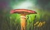 Autumn Mushroom (Dhina A) Tags: sony a7rii ilce7rm2 a7r2 minolta md zoom 3570mm f35 minoltamdzoom3570mmf35 1983 14 macro sharp bokeh constantf35 modified f28 autumn seasonal mushroom