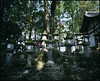 Nara Matatabi #5 (holy) Tags: plaubel makina 67 6x7 fujifilm pn160ns nikkor brownie rangefinder rf folding 蛇腹 w67 55mmf4 wide nara 奈良 building tree kasugataisha 春日大社 lantern shrine