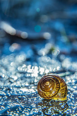 cold day (sami kuosmanen) Tags: suomi syksy sun snow snail ice europe etana jää luonto light lähikuva colorful creative closeup metsä macro nature north finland forest blue dof dead bokeh kuusankoski kouvola