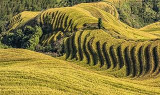 *Longsheng rice terraces @ Dragon's Backbone*