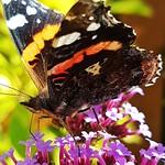 Butterfly Alert! 😁😁 thumbnail