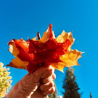 Gathering fall