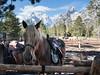 ponies and peaks (Matthew Almon Roth) Tags: tetons grandtetonnationalpark tetonnationalpark grandtetons jennylakelodge jennylake