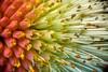 Autumn Shades (mveskilt) Tags: flowers spring flower plant plants graden flora vibrant colours colourful colorful nature naturephotography outdoorphotography elegant martin veskilt martinveskilt martinveskiltphotography digitalphotography photography print prints springplants springflowers bokeh depthoffield focus