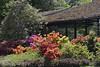 2017.05.10.033 PARIS - Parc Floral - Rhododendrons (alainmichot93 (Bonjour à tous - Hello everyone)) Tags: 2017 france îledefrance seine paris paris12èmearrondissement boisdevincennes parcfloral fleur flower fiore flor rhododendron jardin parc nikon mauve violet rose rouge