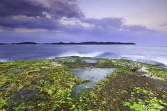 0S1A6770 (Steve Daggar) Tags: pearlbeach seascape landscape longexposure nswcentralcoast gosford woywoy