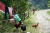 DSC03794 (accabba) Tags: annapurnabasecamp abc trek