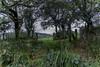 Devon Gate (trevorhicks) Tags: devon field farm gate hedge cloud outdoor canon 6d tamron naked clover tavistock england autumn