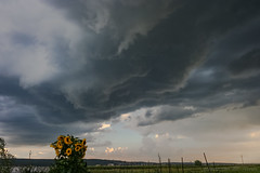 Under the Meso (mesocyclone70) Tags: storm thunderstorm lightning supercell sky skyscape weather stormchase stormchaser stormscape stormstructure stormchasing structure thunder therebeastormabrewin romania transylvania sunflower meso mesocyclone rotate rotating rotation