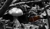 en équilibre sur une feuille - balancing on a leaf (vieux rêveur) Tags: nb noir blanc black white nature desaturation feuille leaf champignon bokeh allfreepicturesnovember2017challenge macro