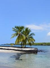 DSC_0639 (*~Dharmainfrisco~*) Tags: dharmainfrisco dharma hawaii big island kona mission church cemetery ocean beach waterfront palm trees sea usa 2015 travel trip