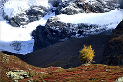 autumn & winter  together (Bernergieu) Tags: 7dwf landscapes switzerland wallis valais mountains trees snow smileonsaturday saturdaylandscapes treesinthepicture inexplore
